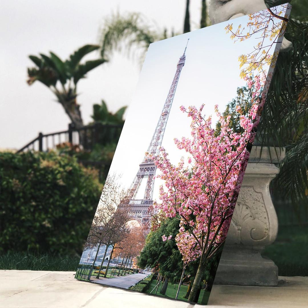 Cherry Blossom_PAR151_4
