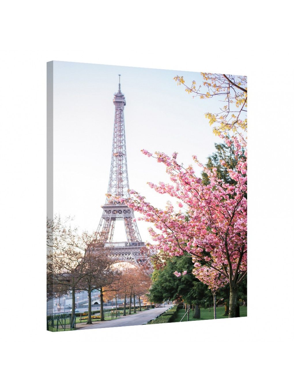 Cherry Blossom_PAR151_0