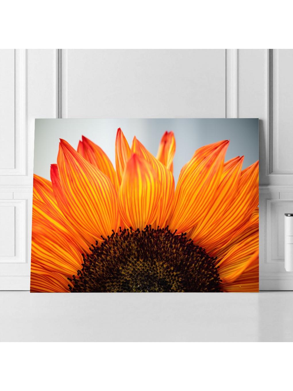 Sunflower_SNF341_2