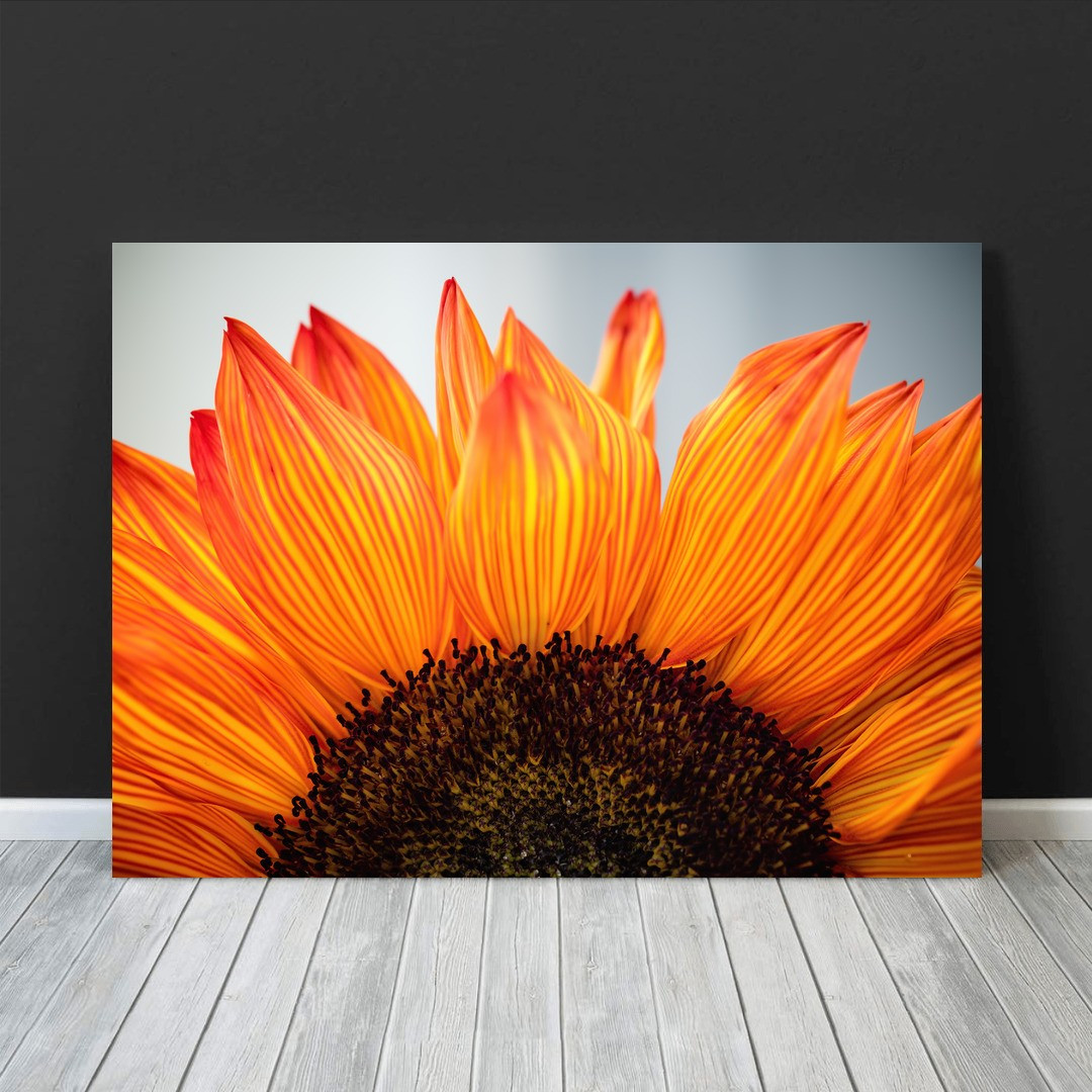 Sunflower_SNF341_3