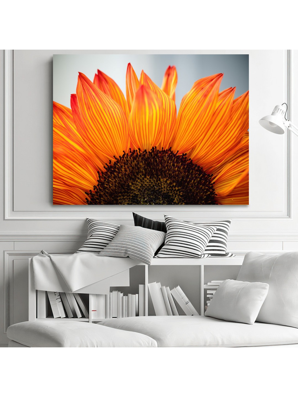 Sunflower_SNF341_1