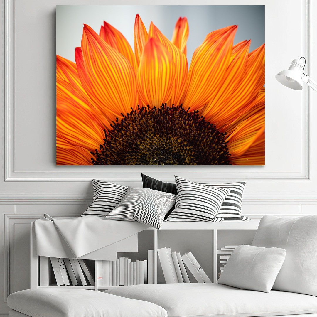 Sunflower_SNF341_1