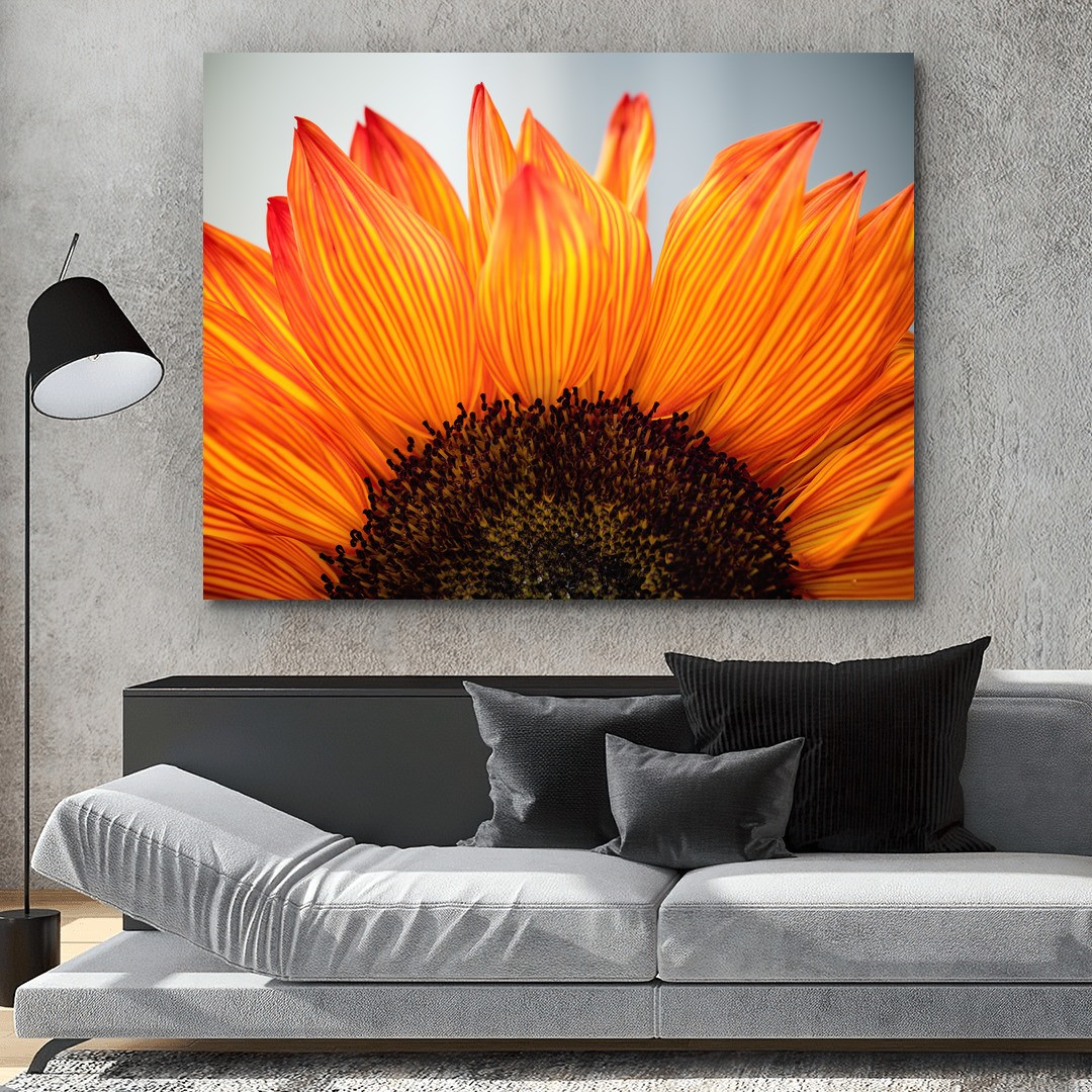 Sunflower_SNF341_5