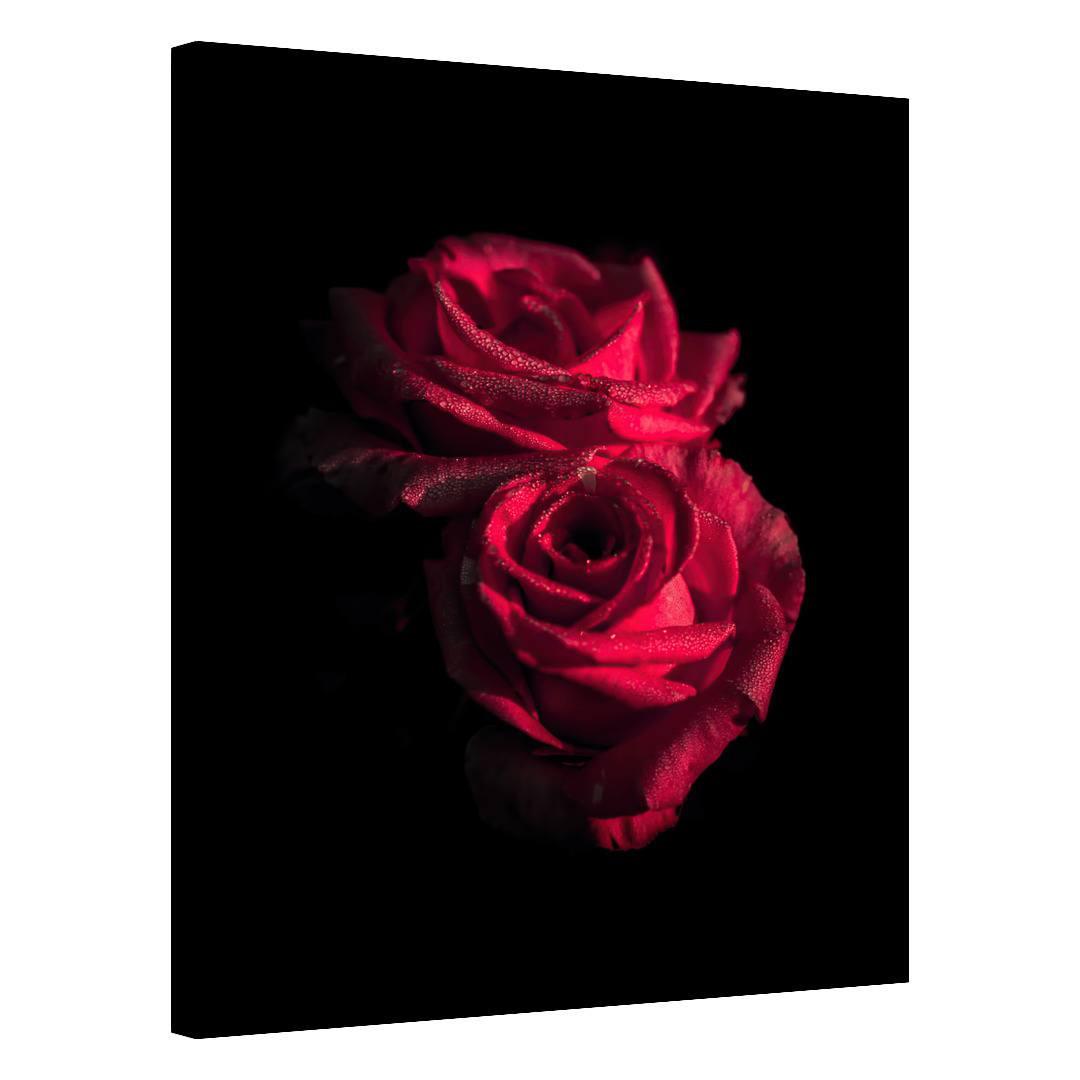 Rose_RSE342_0