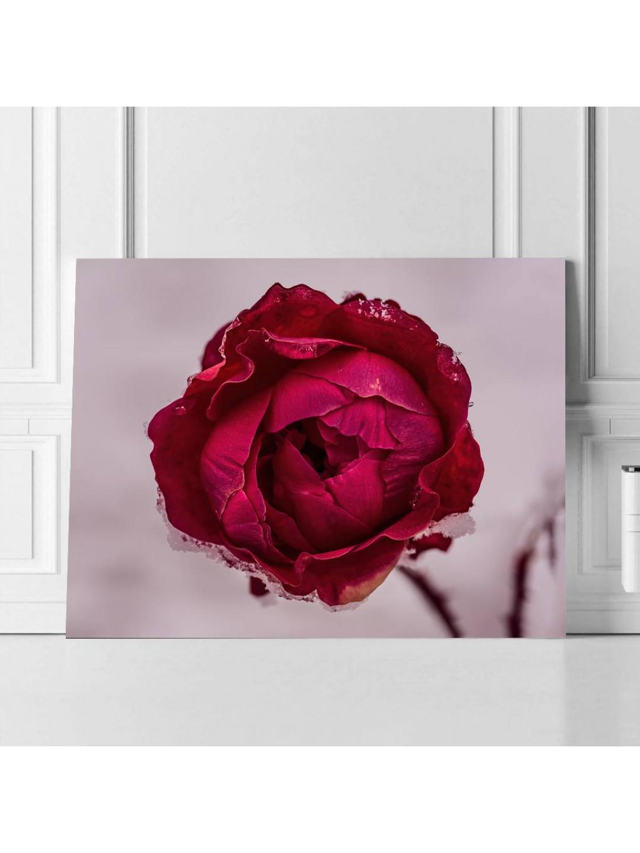 Frozen Rose_FRZRS343_1