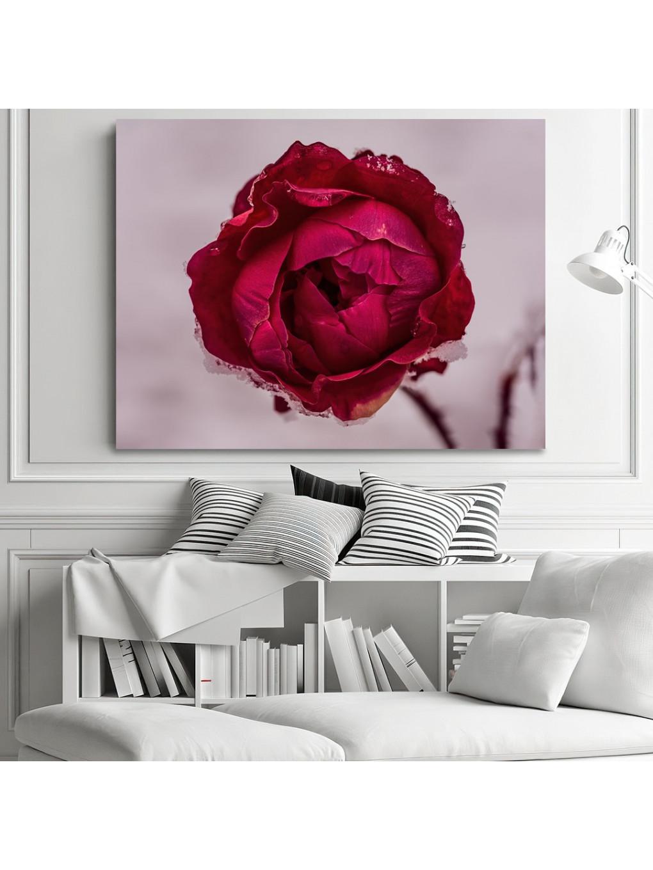 Frozen Rose_FRZRS343_4