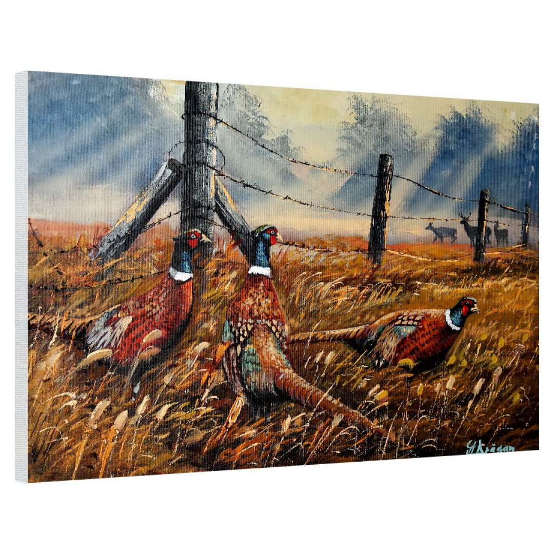 Meadow Mist Pheasants_MMP821_0