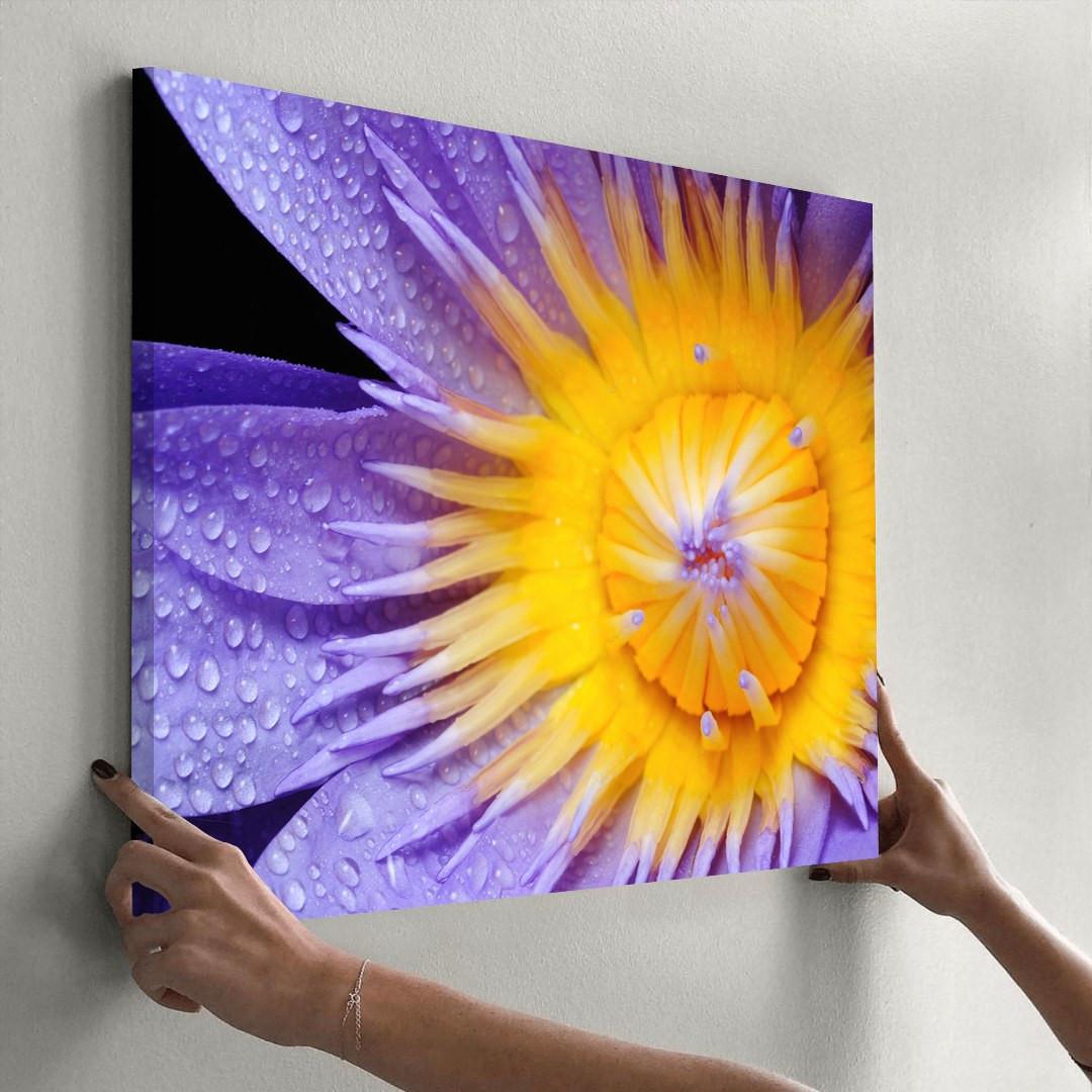 Purple Lily_PRPLL394_3
