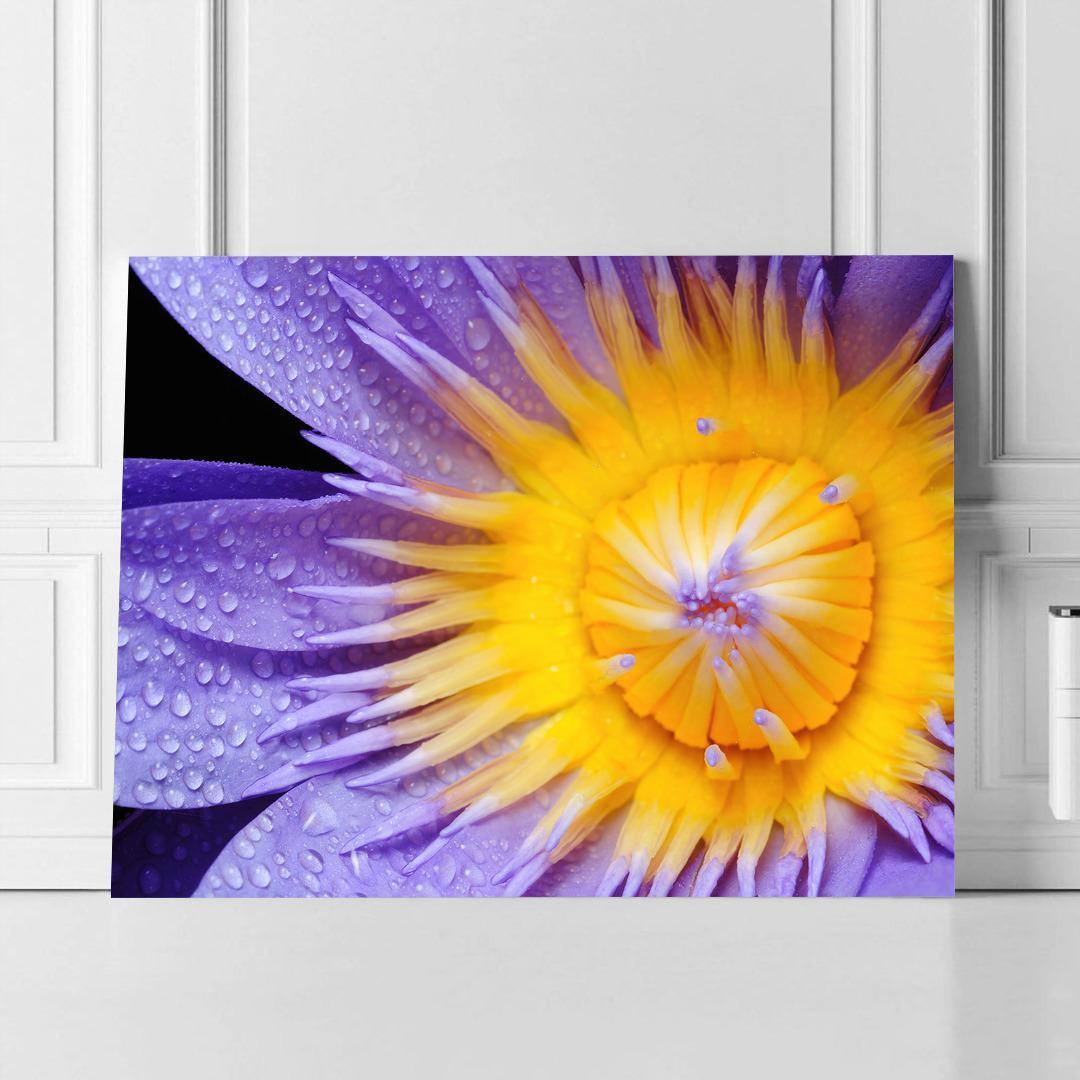 Purple Lily_PRPLL394_2