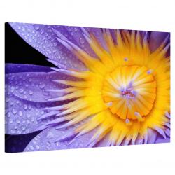 Purple Lily