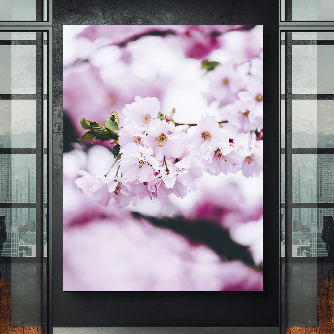Cherry Blossom Spring_CBS497_1