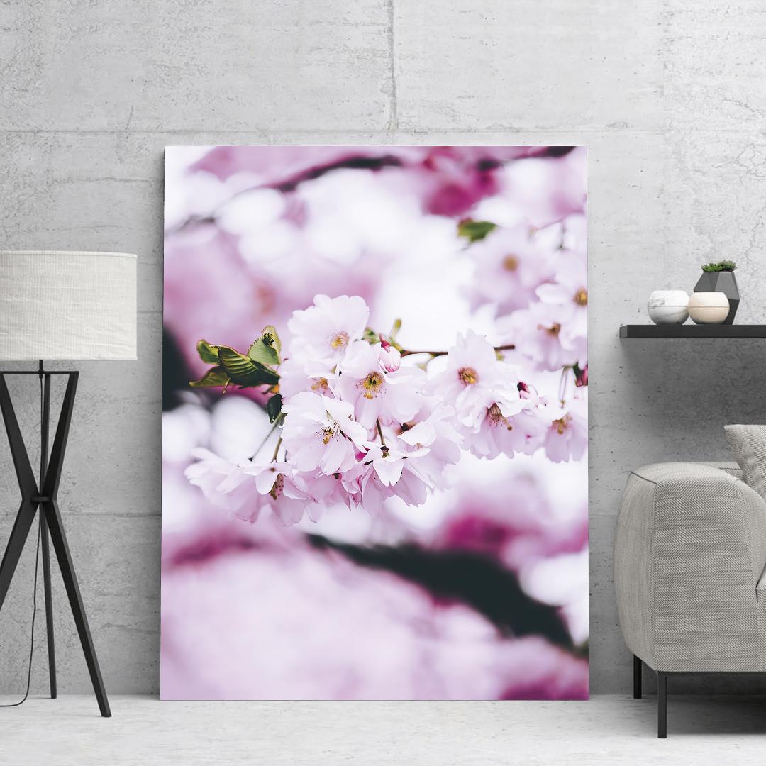 Cherry Blossom Spring_CBS497_4