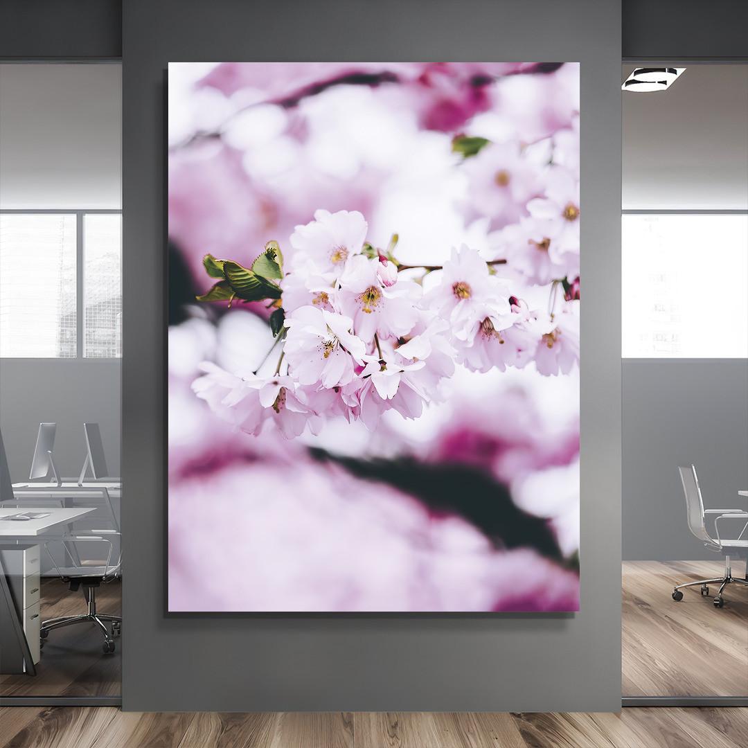 Cherry Blossom Spring_CBS497_5