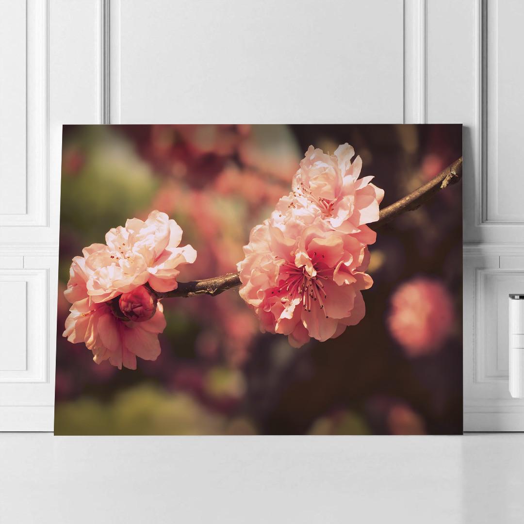 Sakura Blossom_SKRBLS498_5