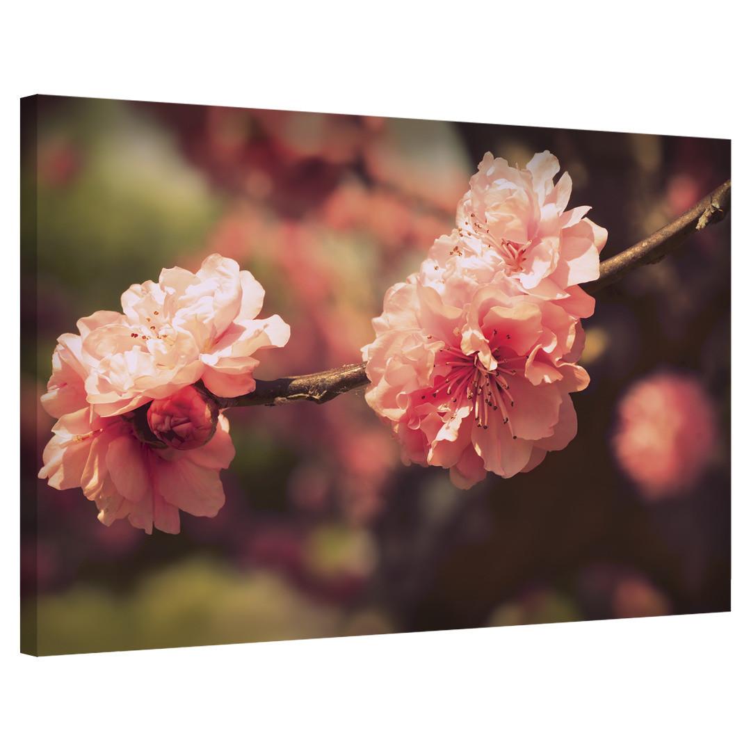 Sakura Blossom_SKRBLS498_0