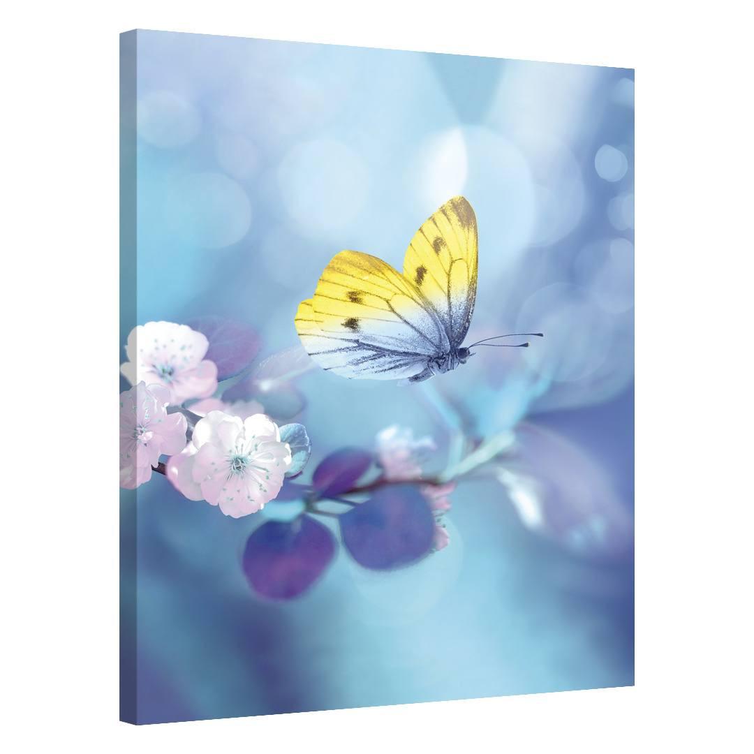 Butterfly Spring_BTTSPR525_0