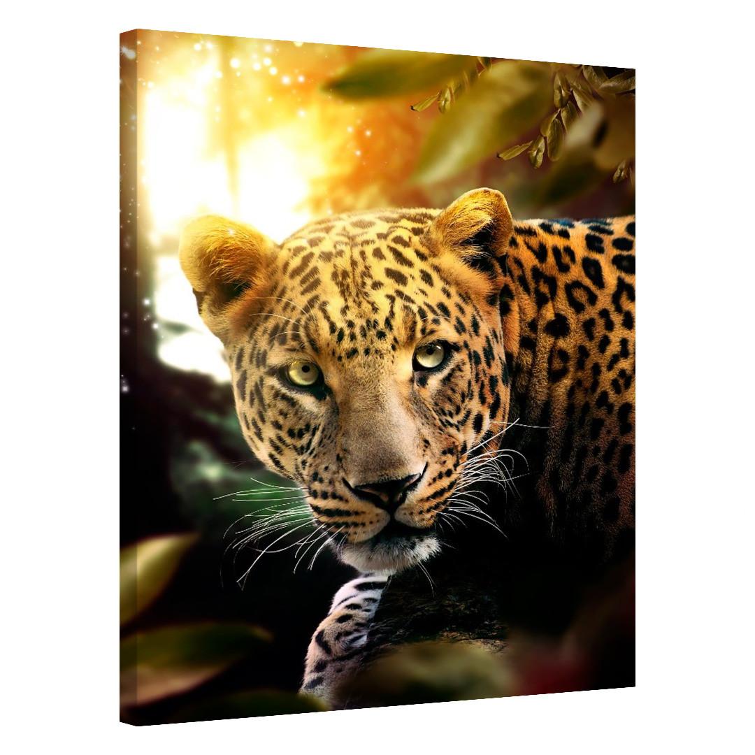 Leopard_LPR581_0