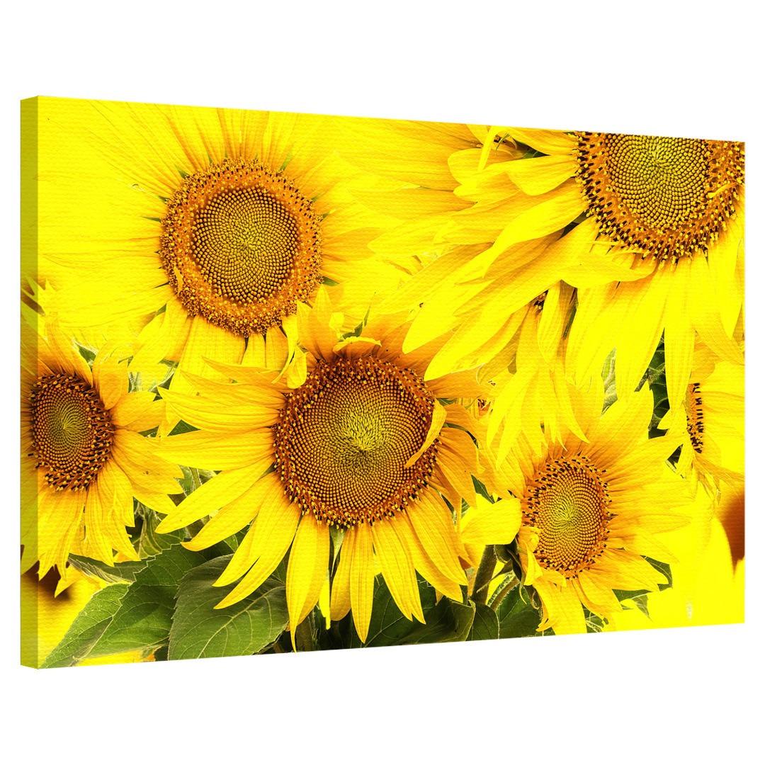 Yellow Sunflower_LLWSNF590_0
